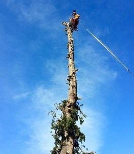 élagueur grimpeur après élaguer arbre