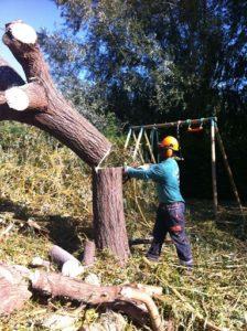 """abattage d""""arbre alès nimes gard 30100"""