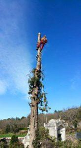 élagueur grimpeur après élaguer arbre 2