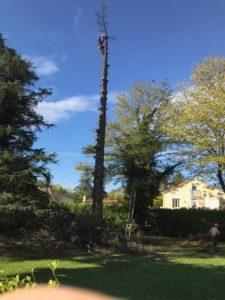 coupe branche élagueur grimpeur dans un jardin